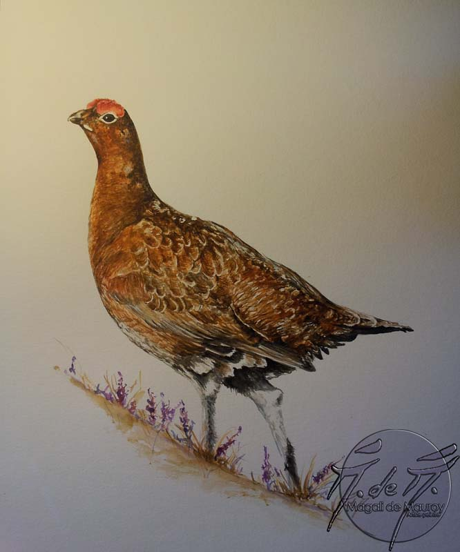 Grouse aquarelle